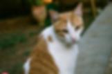 chat communautaire