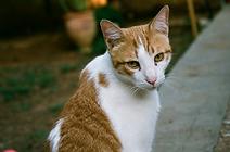 cat sitting ely