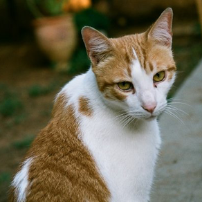 Common Poisonings in Cats