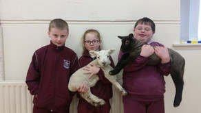 Spring Lambs visit Balla NS