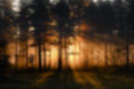 gryning genom grenar.jpg