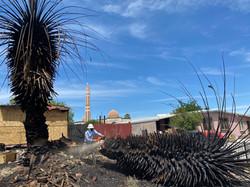 Dead palms.jpg