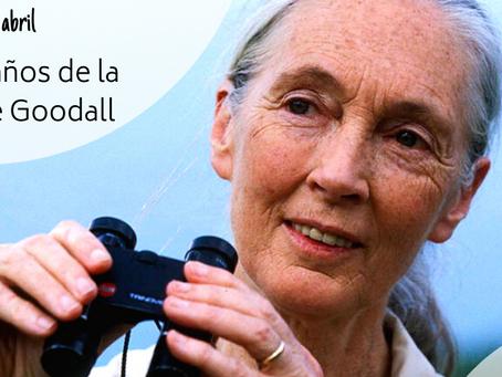 ¡Feliz 86 cumpleaños Dra. Goodall!
