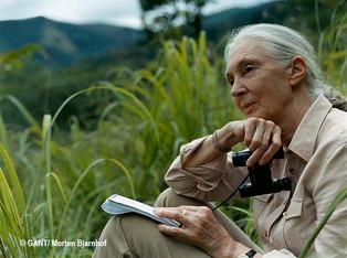 Jane Goodall, una mujer inspiradora.