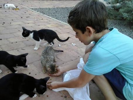 Miguel y los gatos del Parque de los Cuentos.