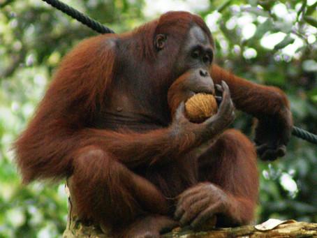 ¿Por qué es un problema el aceite de palma?