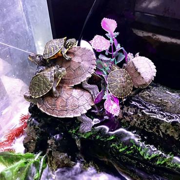 AnimalHouseMilano tartarughe