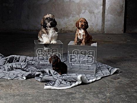 Agenzia animali Milano