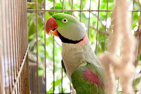 Pensione per pappagalli milano