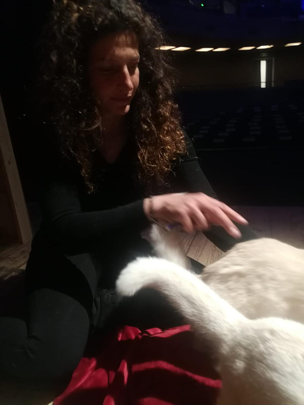 gatti addestrati per eventi