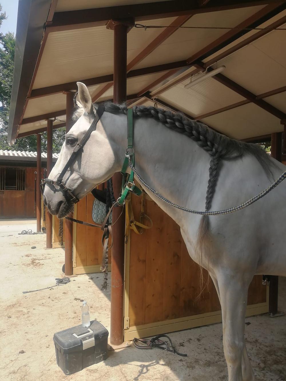Cavalli Attori