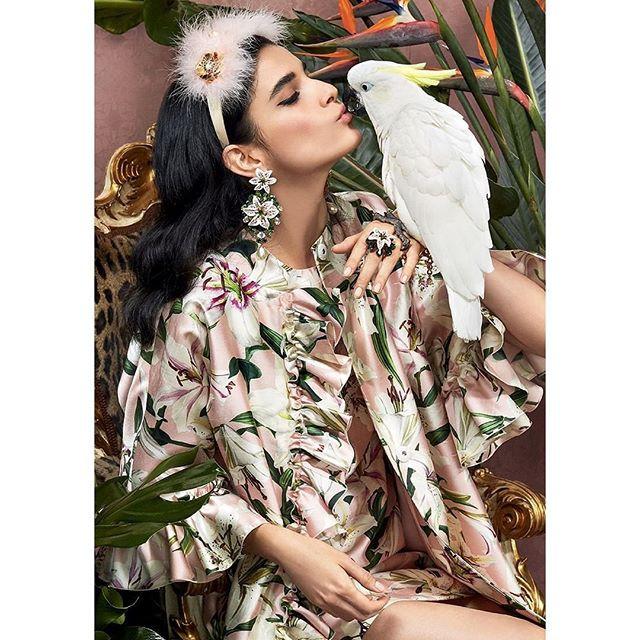 Dolce e Gabbana Pappagallo