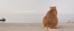 Noleggio Gatti per Spot