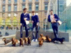 Cani addestrati per eventi