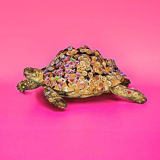 Noleggio tartarughe milano
