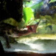 Cosa mangiano le tartarughe d acqua