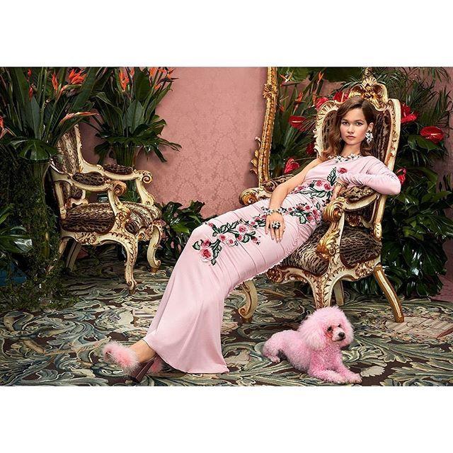 Dolce e Gabbana Barboncino rosa
