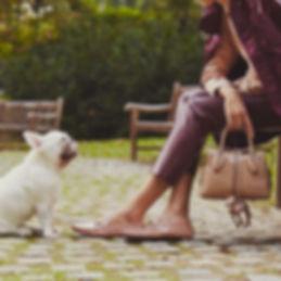 Tods pubblicità cani