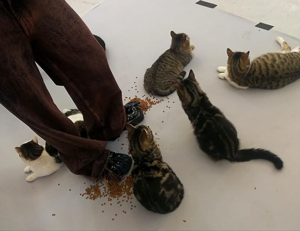 Dust Magazine cats