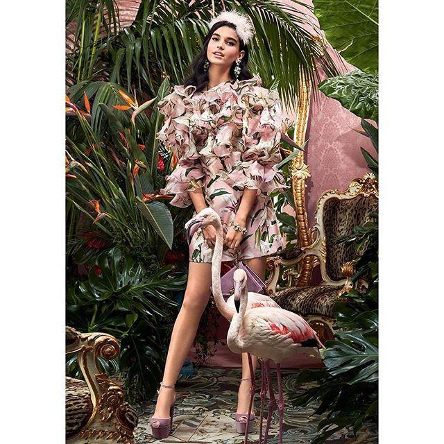 Dolce e Gabbana Fenicotteri