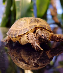 Vendita tartarughe a Milano