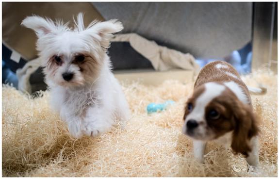 AnimalHouseMilano cuccioli