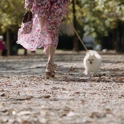 Dolce e gabbana video con cani