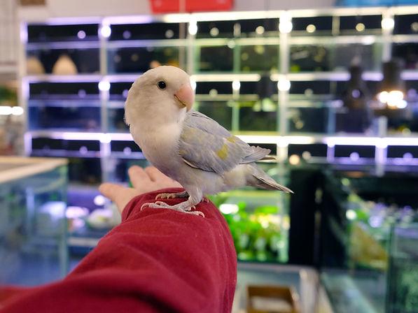 Negozio di  pappagalli a Milano