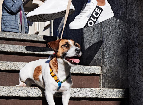 Dolce&Gabbana Dogs Video e shooting
