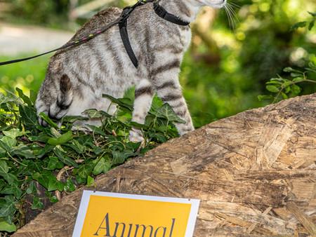 Casting per animali: 27/06/2020 Cambiago Centro Ippico La Rocca GALLERY