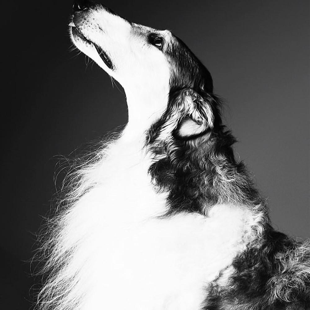Agenzia Cani Attori