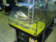 vasca per tartaruga