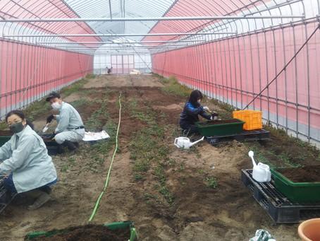 トマトと野菜の農園教室
