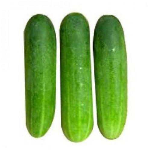 Green Cucumber Desi (देसी खीरा)