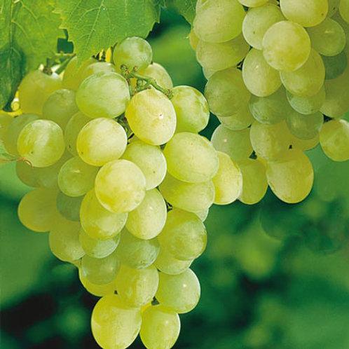 Grapes (अंगूर)