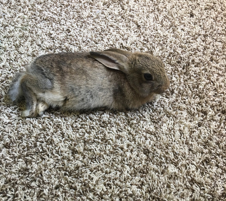 Our baby Lou lounging on the carpet