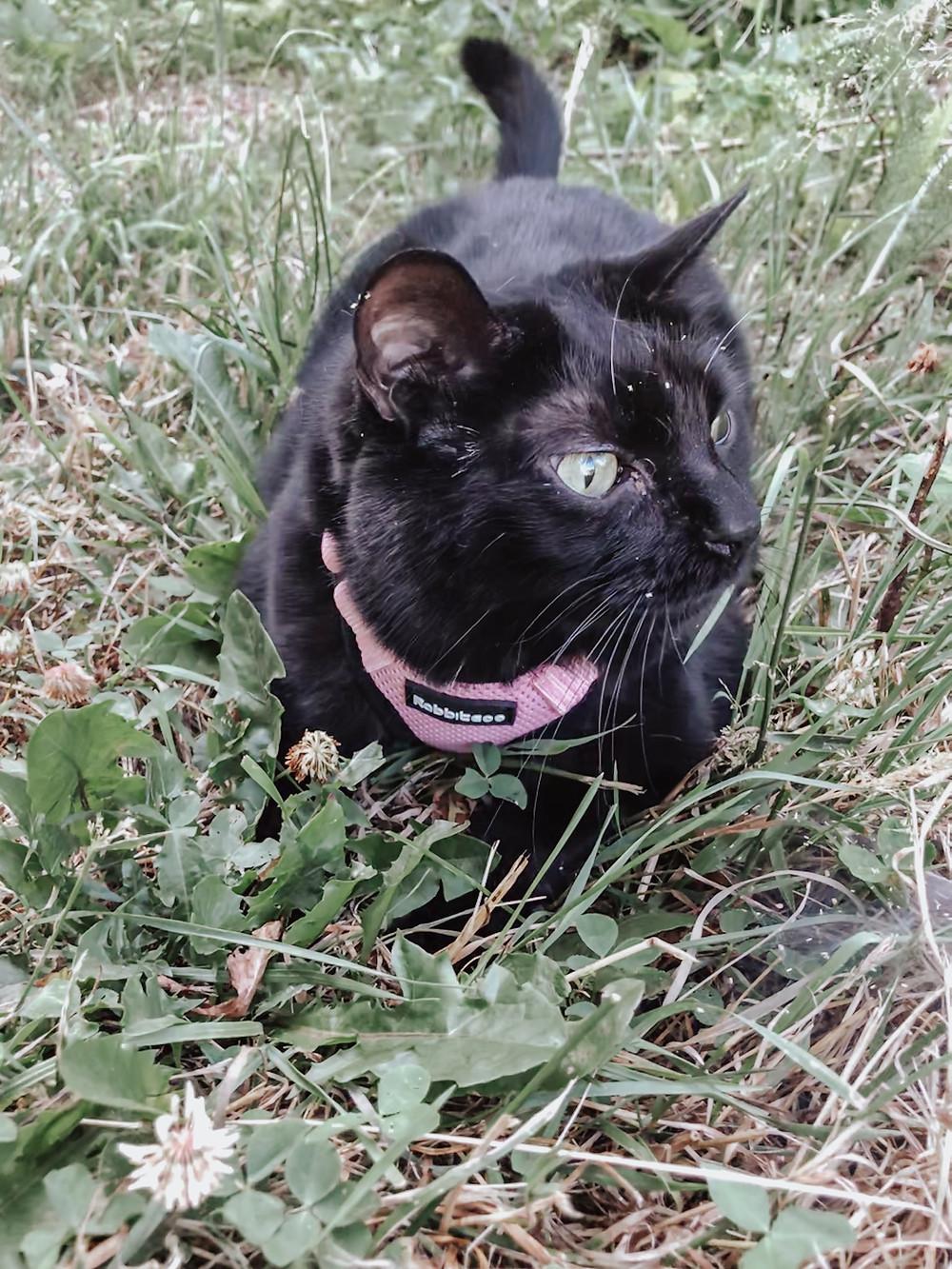 Tempe enjoying the outdoors