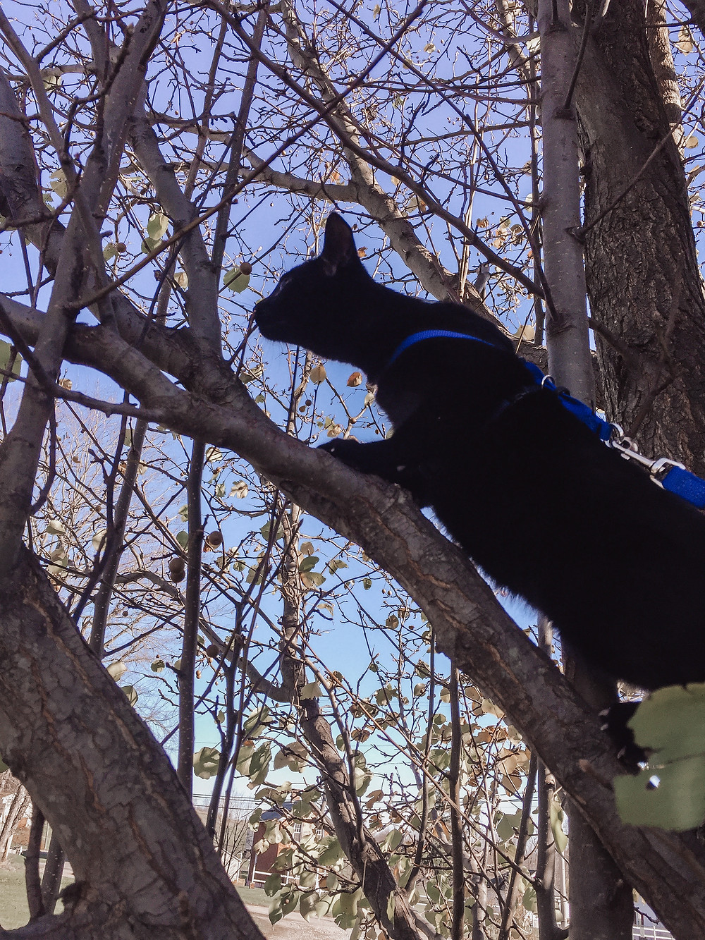 a young Seely climbing a tree