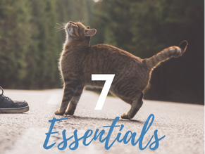 The 7 Essentials Every Traveling Cat Needs