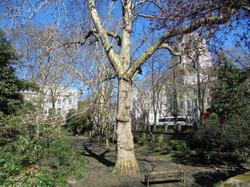 Malet Street Gardens