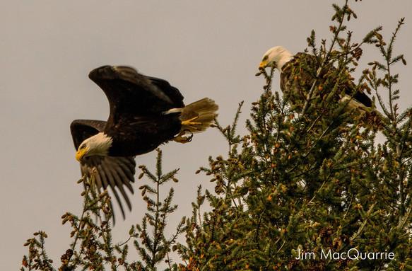 two eagles.jpg