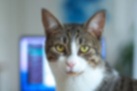 animal-cat-close-up-909661.jpg
