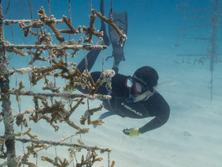 RCL WORKERS TAKE THE PLUNGE TO HELP 'RESCUE A REEF' OFF MIAMI