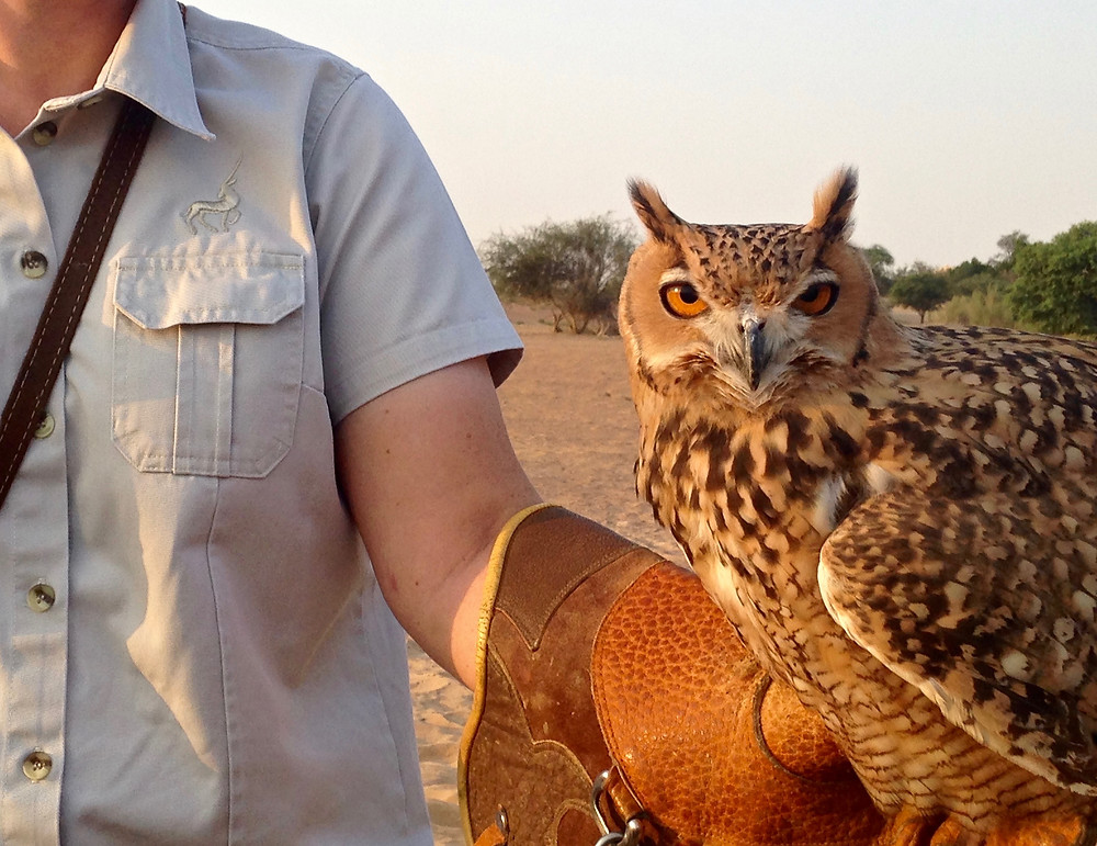 Falconry at Al Maha Desert Resort, Dubai