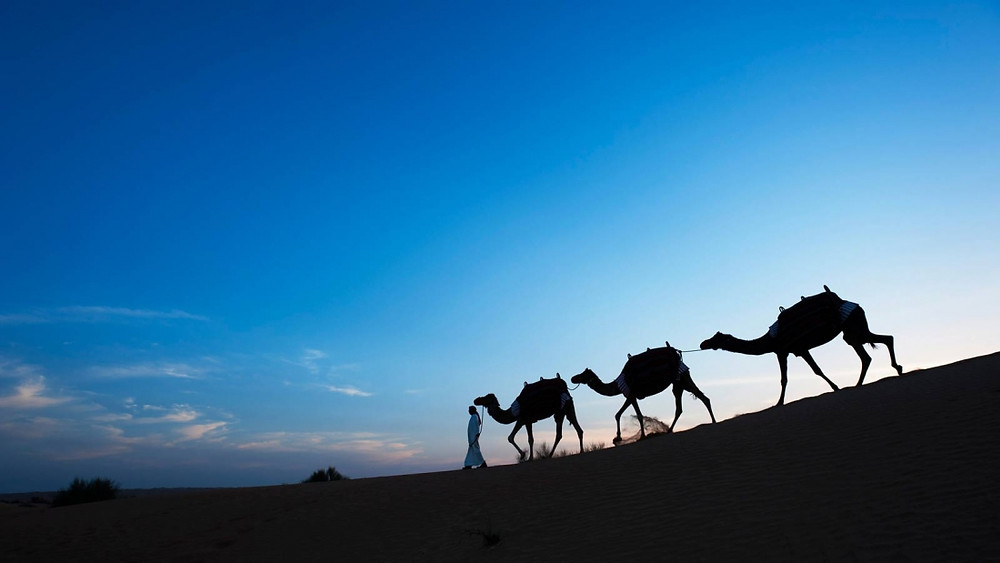 Silhouetted camels at dusk at Al Maha Resort, Dubai