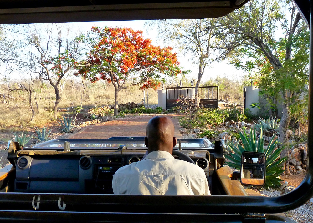 Game drive at #JamalaMadikwe