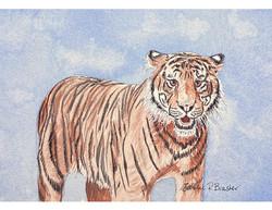 Tiger twk sm