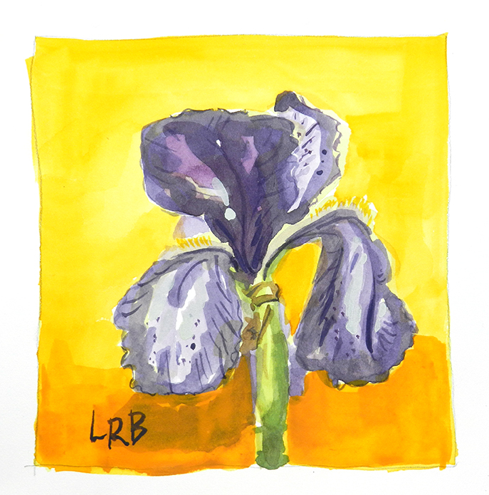 Purple iris on orange sm