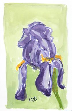 Blue iris on green background sm