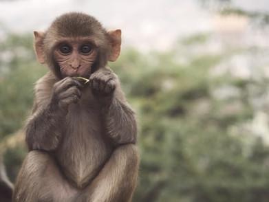 Indonesia Ada Diperingkat Pertama Penghasil Konten Kekerasan Hewan?